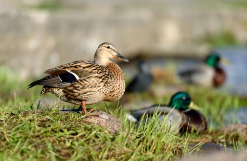 bird-watching-bucuresti