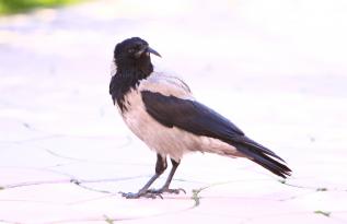Birdwatching @ Caro City Resort